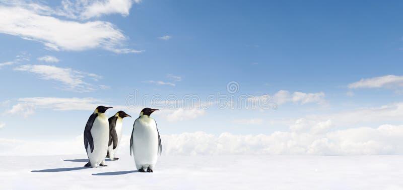 Pingüinos en Ant3artida foto de archivo libre de regalías