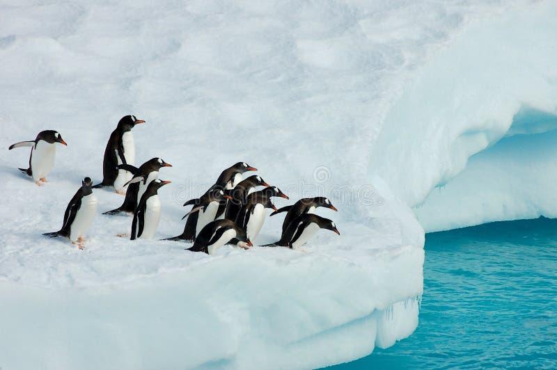 Pingüinos en flujo del hielo fotos de archivo libres de regalías