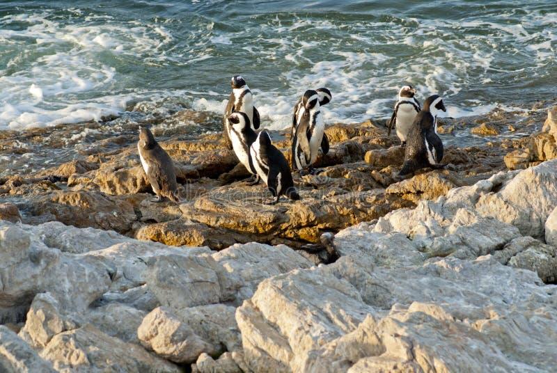 Pingüinos en una playa rocosa foto de archivo libre de regalías