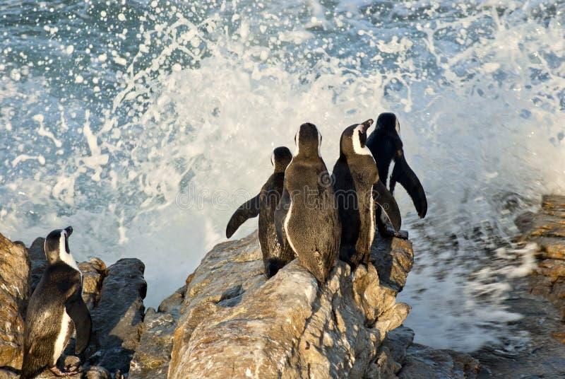 Pingüinos en una playa rocosa imagenes de archivo