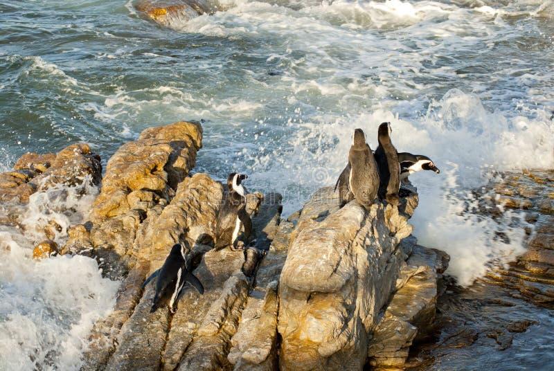 Pingüinos en una playa rocosa fotografía de archivo