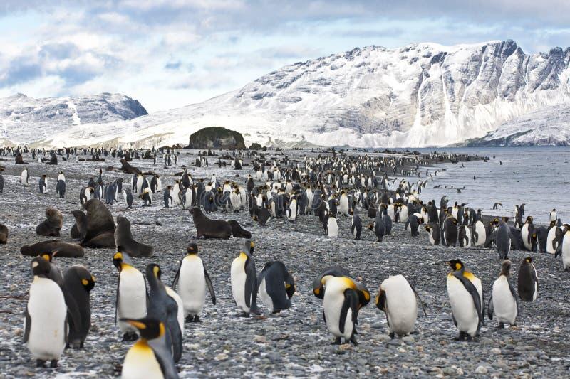 Pingüinos, montañas y océano de rey en Geogia del sur imagen de archivo libre de regalías