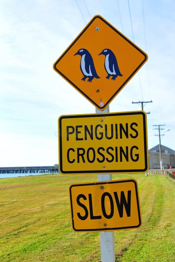 Pingüinos que cruzan la muestra de camino fotos de archivo