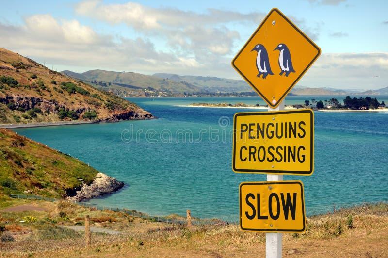 Pingüinos que cruzan, península de la señal de tráfico de Otago imagen de archivo