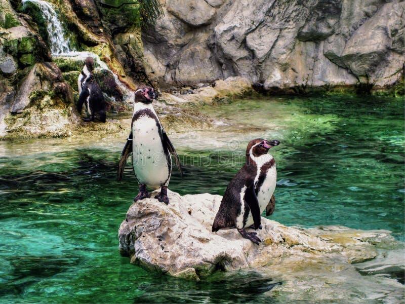 Pingüinos que se secan apagado fotografía de archivo libre de regalías