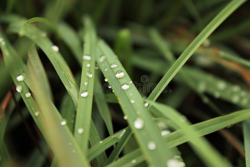 Pingo de chuva na natureza II fotografia de stock