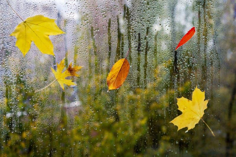 Pingos de chuva em uma placa de janela com folhas coloridas em um fundo borrado fotos de stock