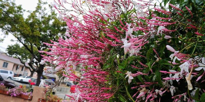 Pingos de chuva na flor fotografia de stock