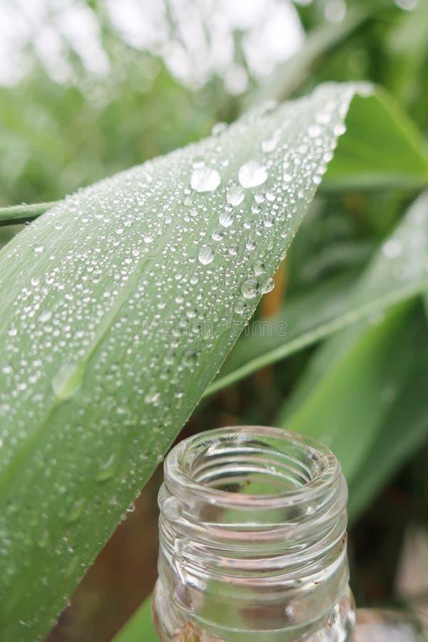 Pingos de chuva na folha de lingüeta fotos de stock royalty free