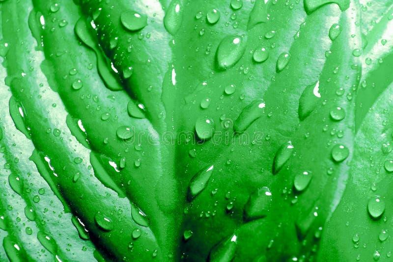 Pingos de chuva nas folhas de uma planta tropical A palmeira sae do fundo da natureza nave Palma raindrop Floresta ?mida fotos de stock royalty free