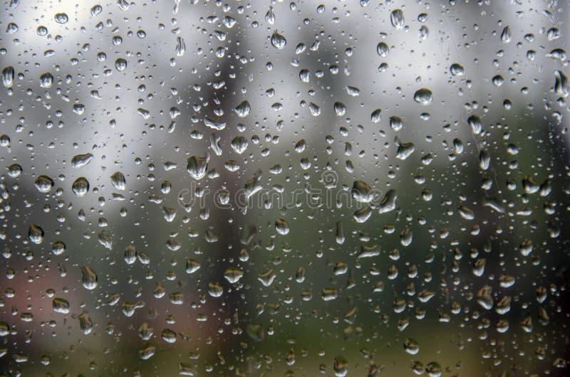 Pingos de chuva no vidro panorâmico, contra os pinhos do norte altos no fundo foto de stock