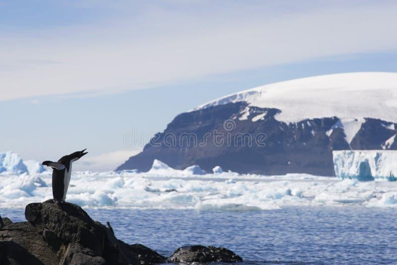 Pingouin d'Adelie en bluff de Brown, Antarctique photographie stock libre de droits