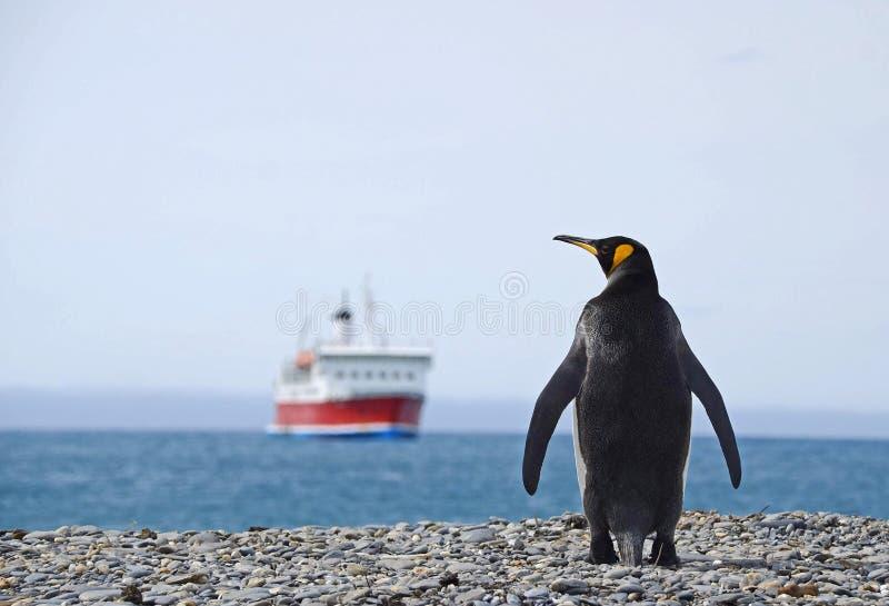 Pingouin de roi avec le bateau, la Géorgie du sud photos stock
