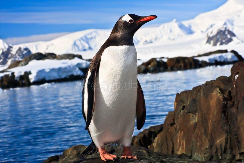 Pingouin en Antarctique photographie stock