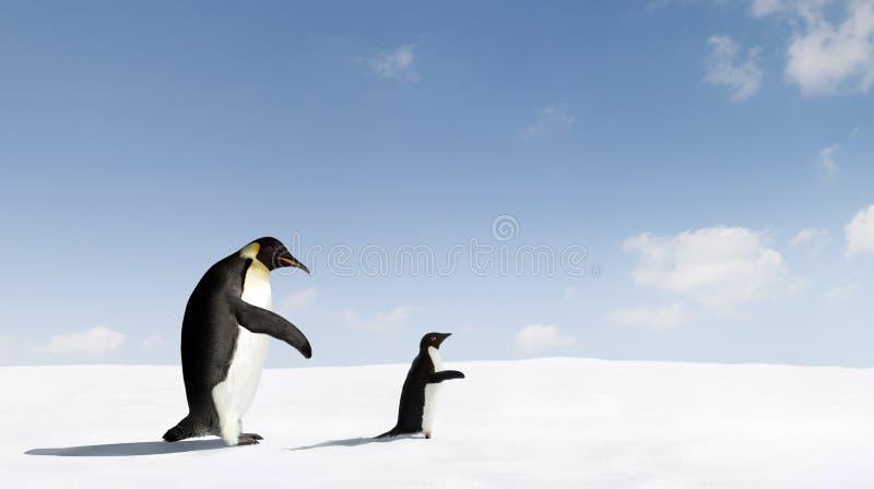 pingouins images libres de droits