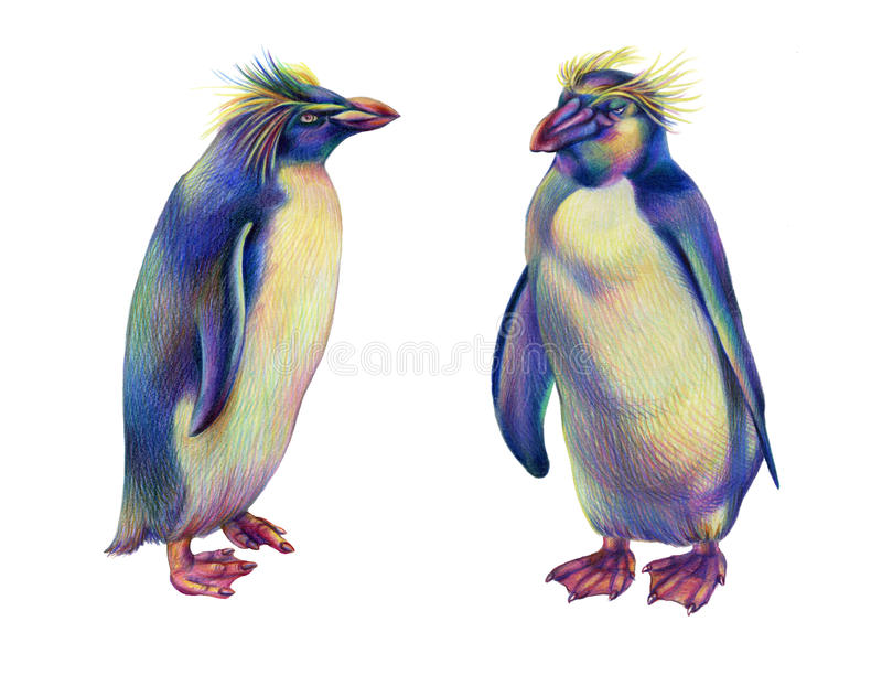 Pingouins colorés de rockhopper d'arc-en-ciel de dessin au crayon image libre de droits