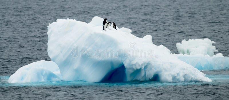 Pingouins d'Adelie sur la glace images stock