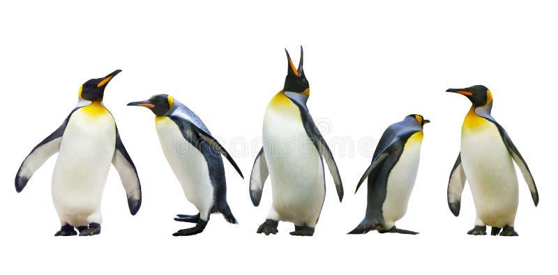 Pingouins d'empereur
