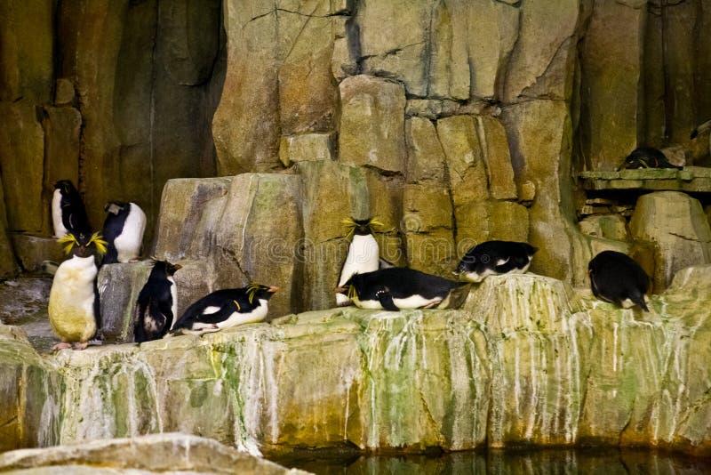 Pingouins dans un aquarium images libres de droits