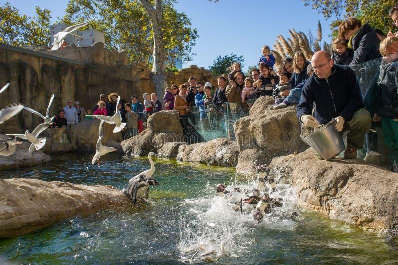 Pingouins de alimentation dans le zoo De Barcelone image stock