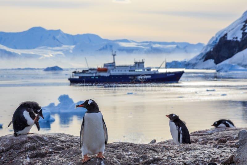 Pingouins de Gentoo se tenant sur les roches et le bateau de croisière image libre de droits
