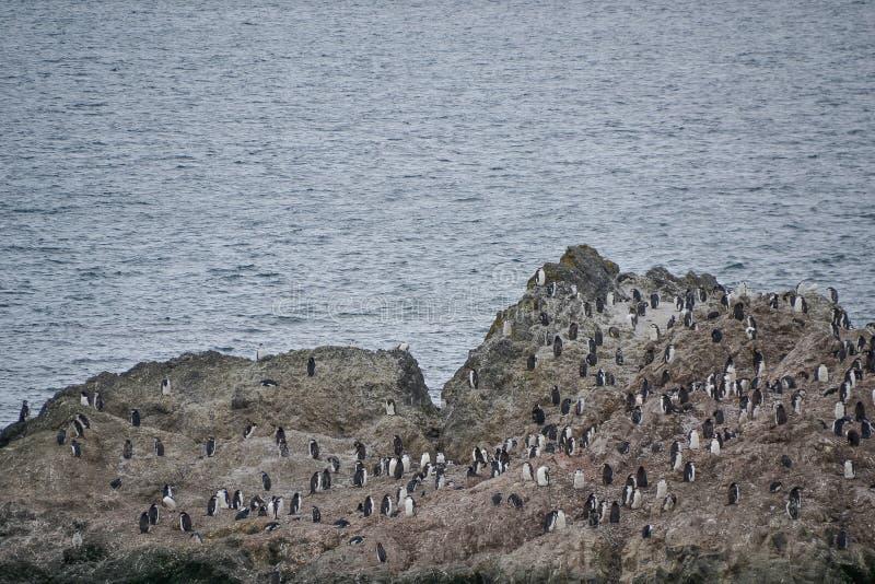 Pingouins de jugulaire se tenant sur un flanc de coteau rocheux en Antarctique images libres de droits