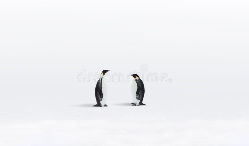 pingouins de l'Antarctique photo stock