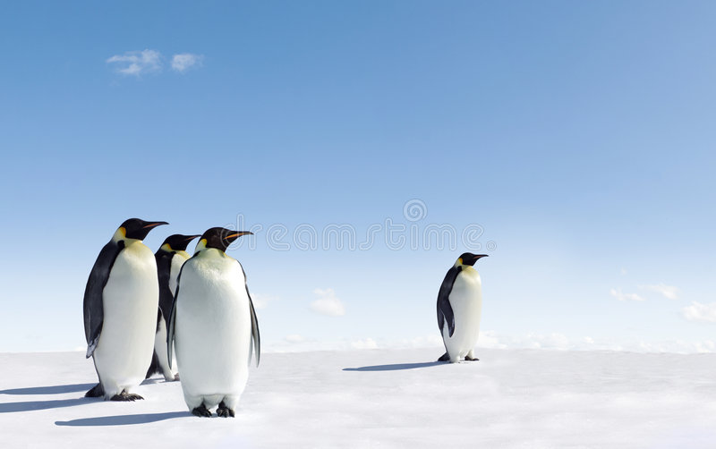 pingouins de l'Antarctique photographie stock
