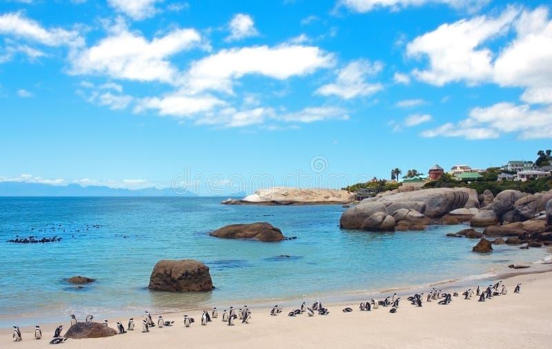 pingouins de rochers de plage de l'Afrique du sud images stock