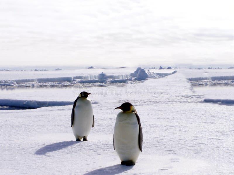 Pingouins en Antarctique 2 image libre de droits