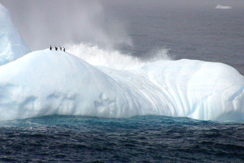 Pingouins sur l'iceberg photo stock
