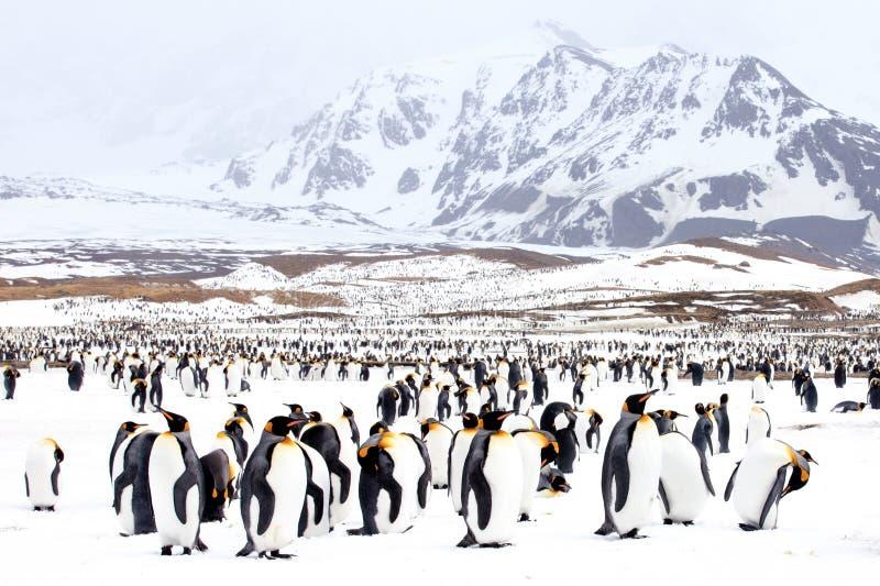 Pingouins sur la neige image stock