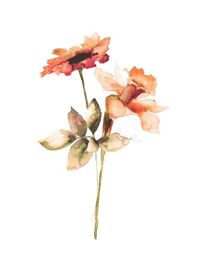 Pingstlilja- och Gerber blommor vektor illustrationer