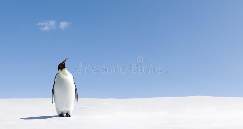 Pinguïn in Antarctica stock foto's