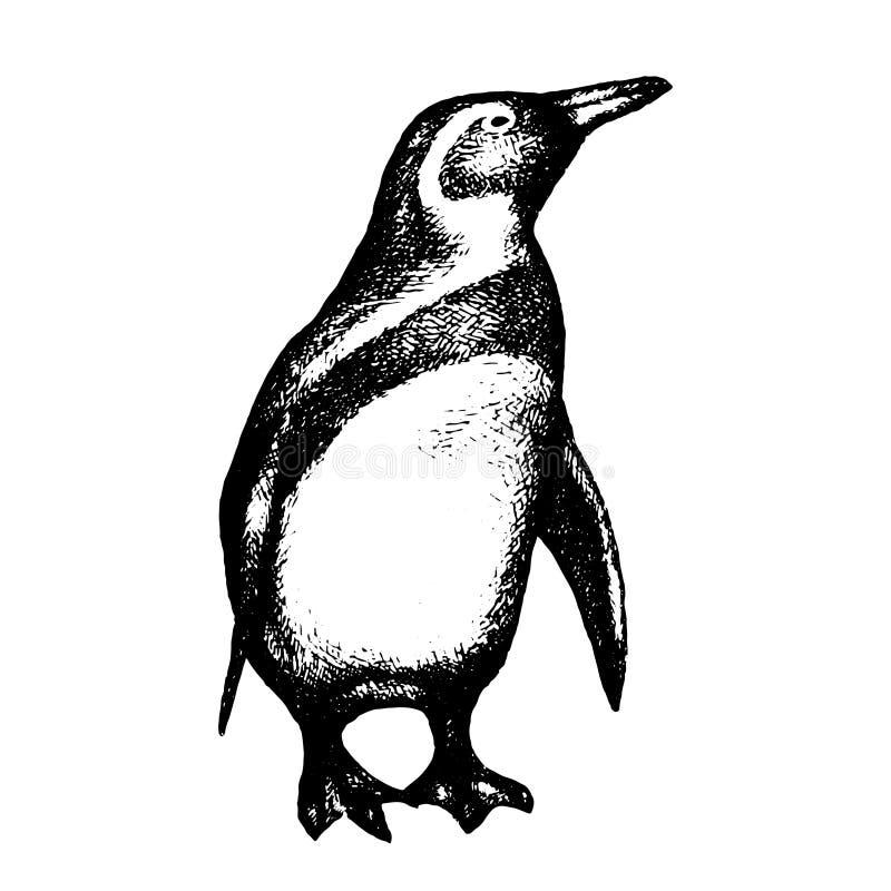 Pinguïn die op Wit wordt geïsoleerd Getrokken hand Vector royalty-vrije stock afbeeldingen