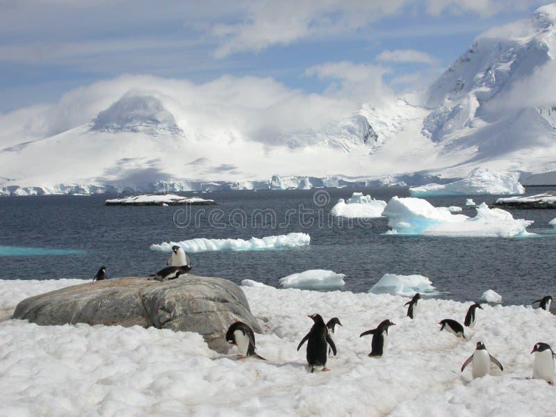 Pinguïnen in Antarctica