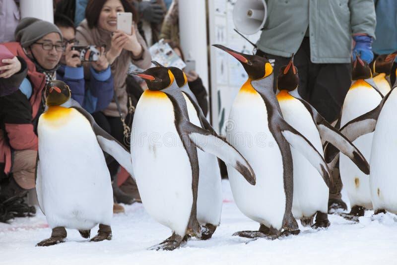 Pinguïnen in Asahiyama-dierentuin royalty-vrije stock foto's