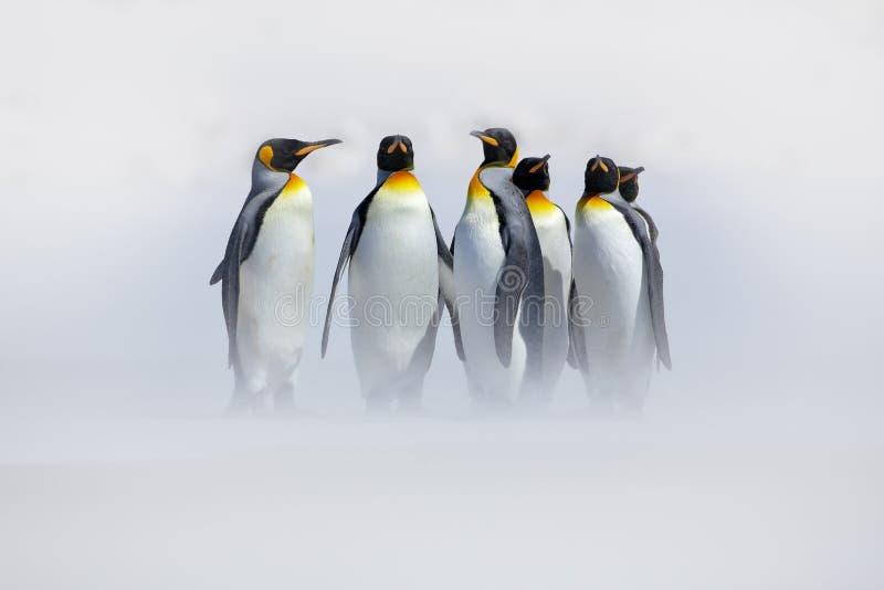 Pinguïnen in de sneeuw Groep Koningspinguïnen die aan overzees strand met golf komen een blauwe hemel Vogels op het strand Grappi royalty-vrije stock fotografie