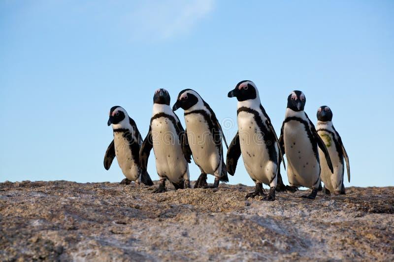 Pinguïnen die zich op een rots bevinden royalty-vrije stock afbeelding