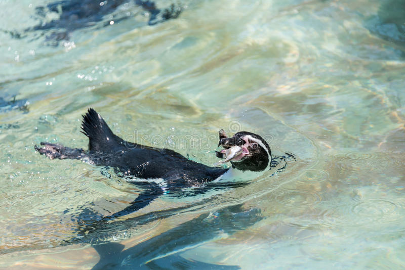 Pinguïnen in Hay Park in Kiryat Motzkin, Israël royalty-vrije stock afbeeldingen