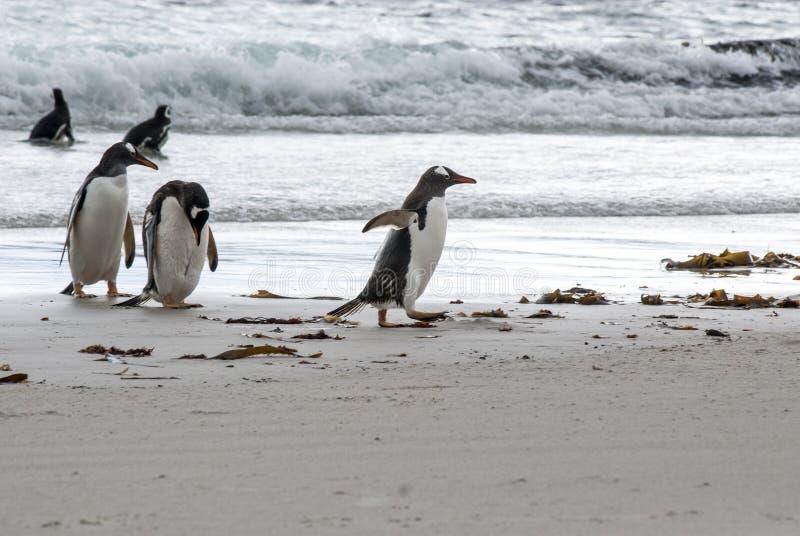 Download Pinguïnen - Ik Ben In Zeven Haasten! Stock Afbeelding - Afbeelding bestaande uit dier, naughty: 39115871