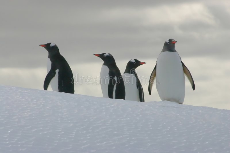 Pinguïnen op een ijsberg stock foto's