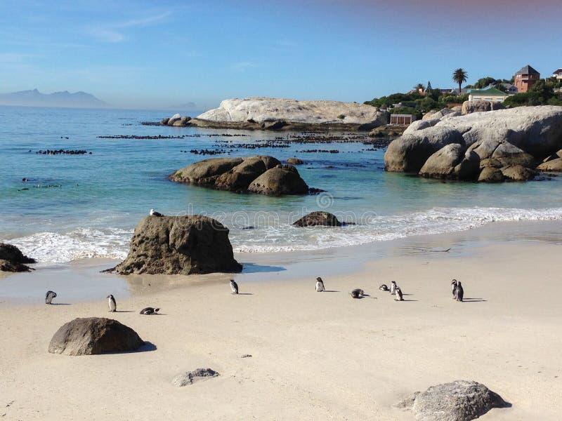 Pinguïnen op het strand royalty-vrije stock foto