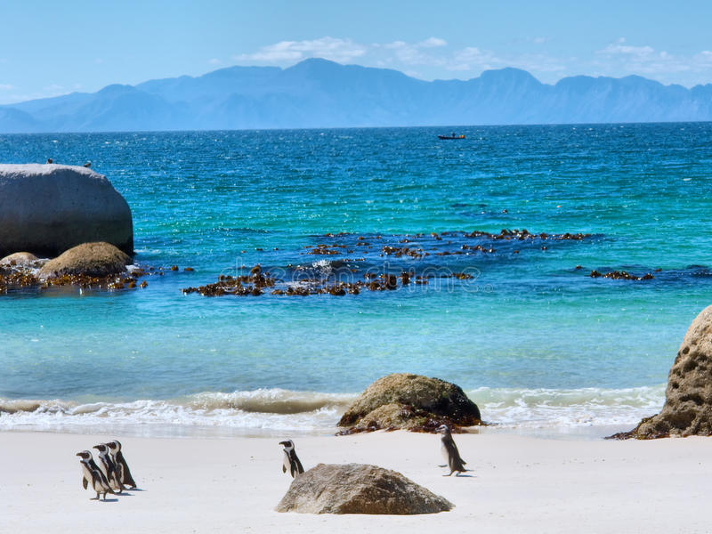 Pinguïnen op strand, bergen op horizon royalty-vrije stock fotografie