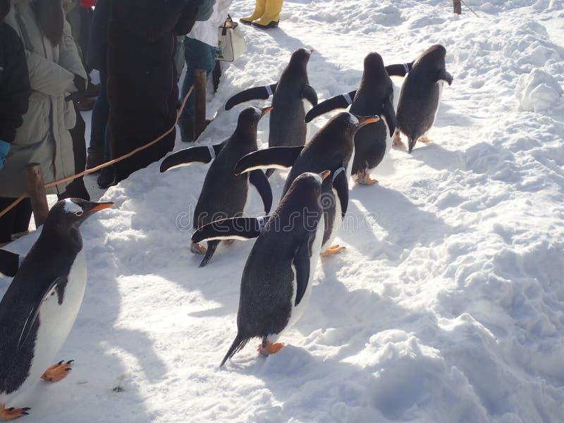 Pinguïnengang in de winter stock fotografie