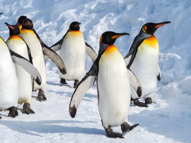 Pinguïngang op sneeuw stock foto's