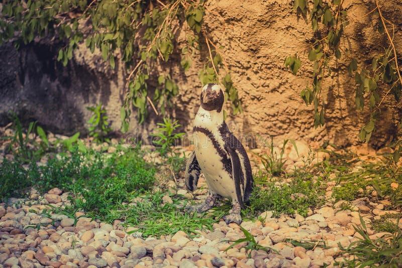Pinguïntribune op gorund een dierentuin royalty-vrije stock foto's