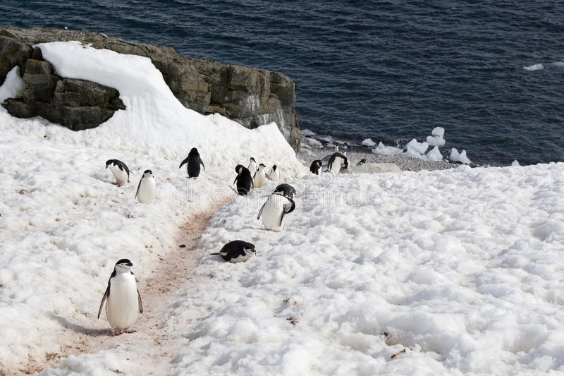 Pinguïnweg Royalty-vrije Stock Foto's