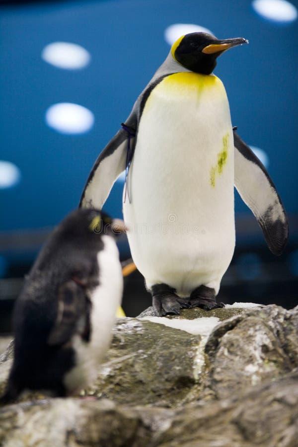 Pinguim imagem de stock royalty free