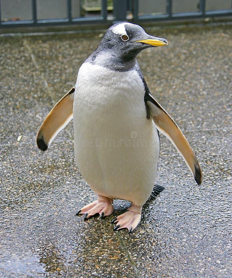 Pinguim 5 imagens de stock royalty free